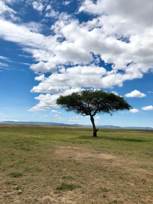 safari-closingtreepic