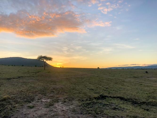 safari-scenic1